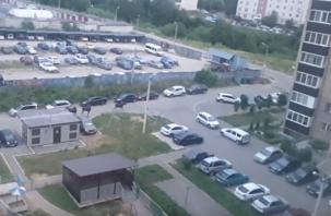 Лоси прогулялись по Киселевке. В Сети появилось видео