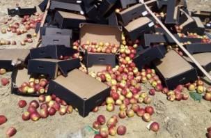 На смоленском полигоне уничтожили более 60 тонн «утеплителя из каменной ваты»