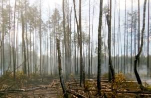 Были слышны взрывы снарядов. В Смоленской области вспыхнул сильный лесной пожар