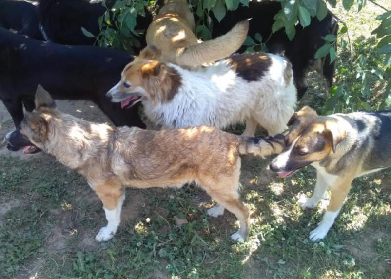 Приюту для собак срочно нужна помощь смолян
