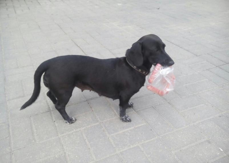 Пьяным и детям запретят выгуливать собак
