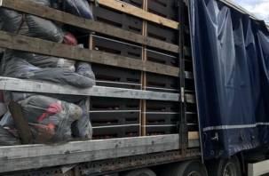 Смоленские таможенники пресекли попытку ввоза «замаскированных» яблок