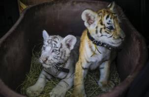 Фотобизнес с дикими животными в России предложили запретить