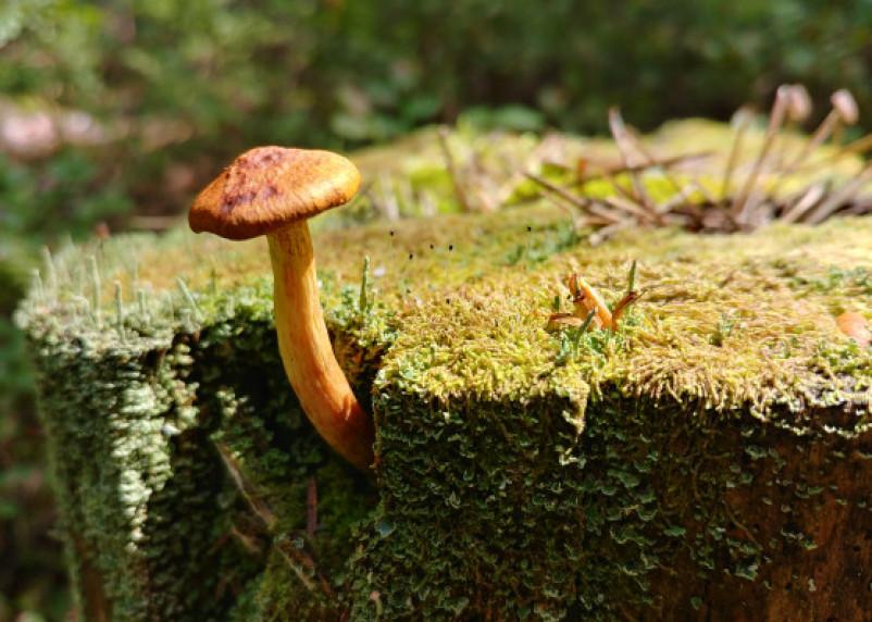 Диетолог опровергла ряд полезных свойств, приписываемых грибам