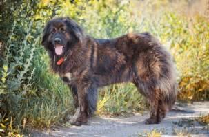 В России утвердили список потенциально опасных собак