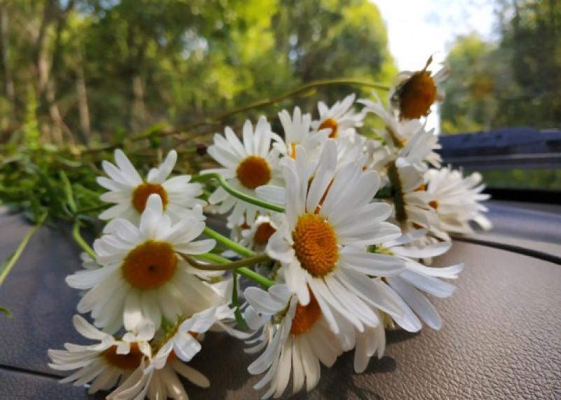 Медики перечислили растения, которые помогут справиться со стрессом