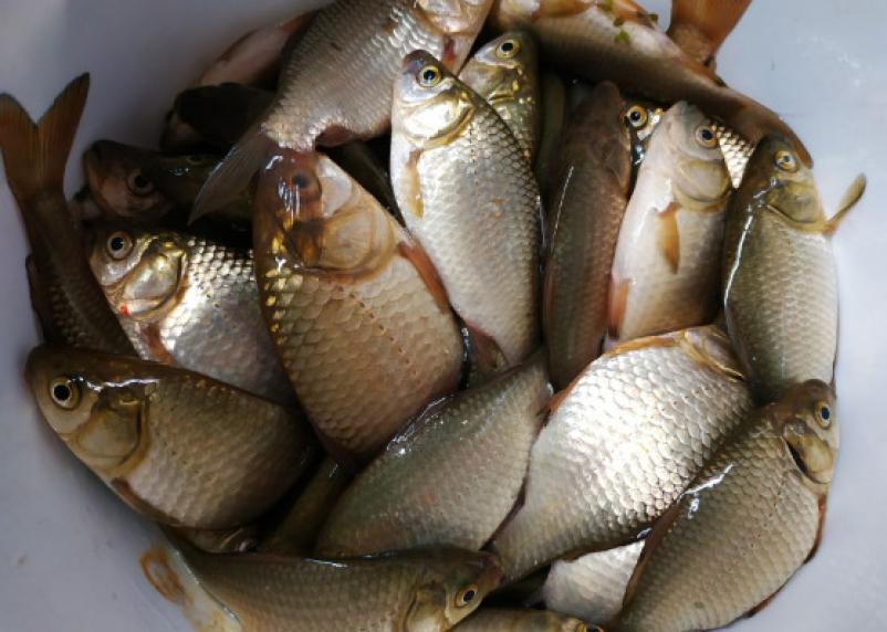 Приятный запах и прозрачная глазурь. Как не ошибиться при покупке рыбы и красной икры