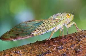 Совет от ученых. Почему люди должны начать есть насекомых