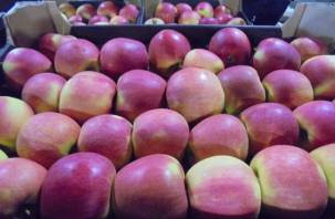 Смоленские таможенники задержали фрукты «под прикрытием»