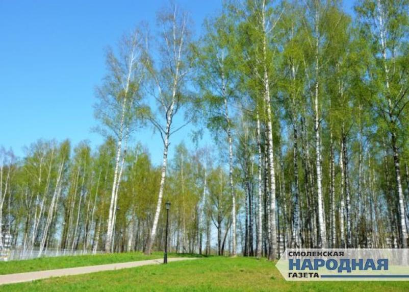 Двух смолян, совершивших разбой в Соловьиной роще, приговорили к тюрьме