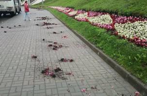 Возле Успенского собора в Смоленске вандалы разгромили клумбы