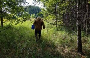 В Сычевском районе пропал 64-летний грибник