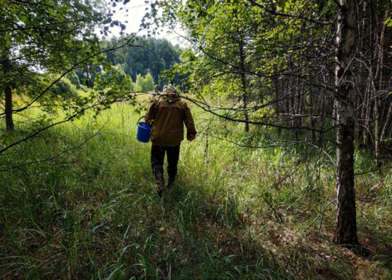 За сутки в смоленских лесах пропали 6 грибников