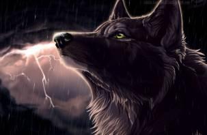 Волк-одиночка. Мессинг назвал единственный знак зодиака, который счастлив в одиночестве