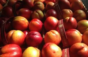 120 тонн «подозрительных» фруктов утилизировали на смоленском полигоне