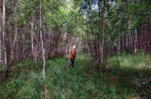 В Смоленском районе в лесу разыскивают мужчину