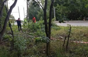 Смоляне возмущены очередной вырубкой деревьев