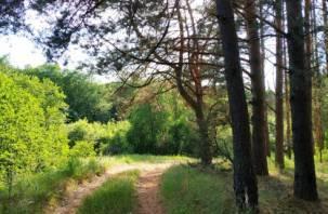 Какая судьба ждет смоленские леса