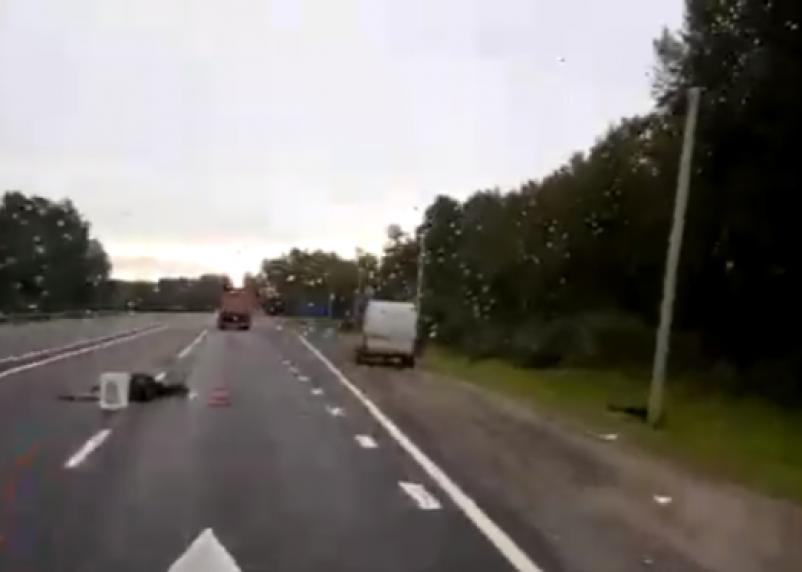 Мертвые лоси разбросаны по трассе. В Сети появилось видео с места серьезной аварии на М1