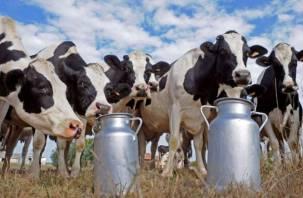 На Смоленщине упало производство молока