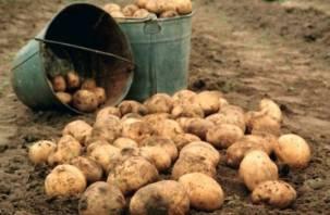 Когда копать картошку по лунному календарю