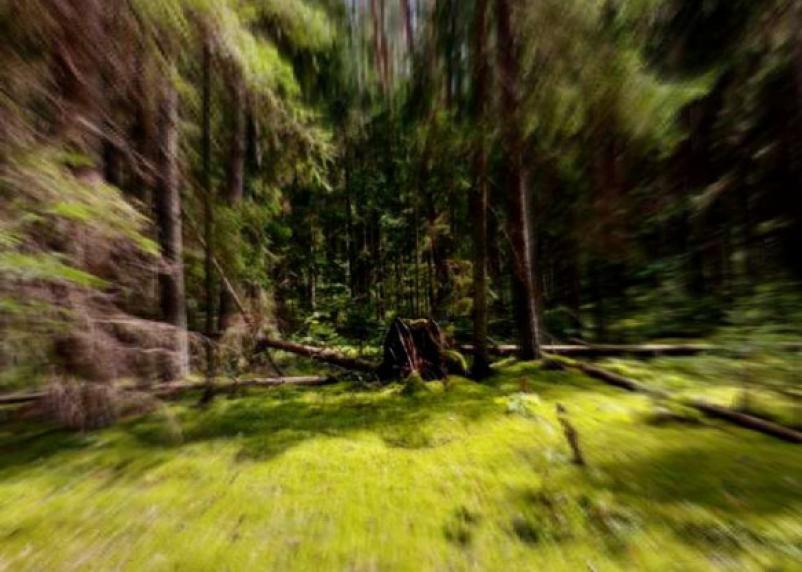 В Смоленской области отмечена «волна» пропаж людей в лесах