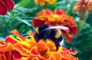 Смолянина заставили перенести ульи с пчелами только через суд