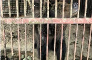 Новые подробности о медведе, который живет в полузаброшенном кафе
