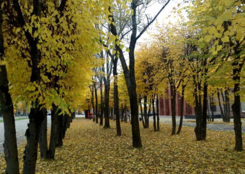 Завтра можно узнать, какой будет осень