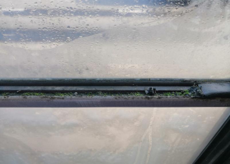 В Смоленске окна троллейбуса начинают зарастать мхом
