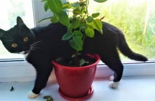 Почему с кошками жить веселее и интереснее. Названы главные преимущества