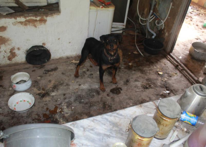 В Смоленской области собаки погибают в заброшенном доме