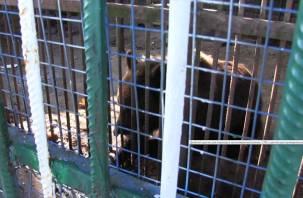 Побывали в гостях у знаменитой медведицы на трассе под Сафоново