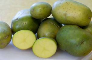 Почему позеленевший картофель смертельно опасен