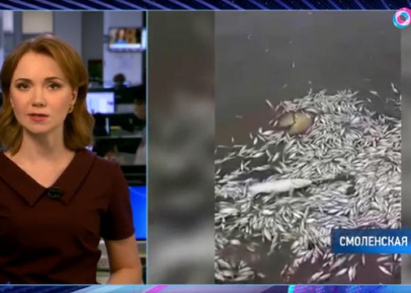 О массовой гибели рыбы в озере на Смоленщине рассказал телеканал ОТР