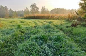 Беспечный москвич заплатит двойной штраф за сорняки на участке