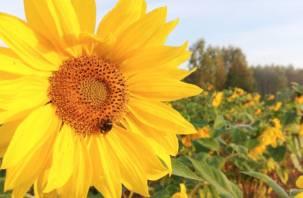 В Смоленскую область в понедельник придет жара