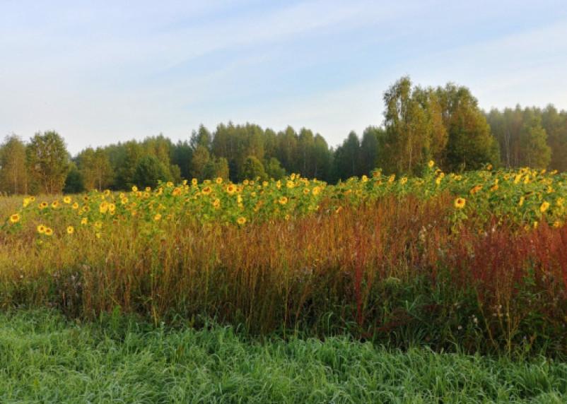 Москвичка заплатит двойной штраф за сорняки на участке в Вяземском районе