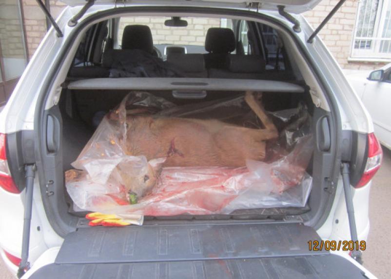 В Смоленском районе поймали двух браконьеров с косулей и зайцами