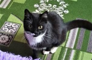 Жители России чаще заводят дома кошек, чем собак