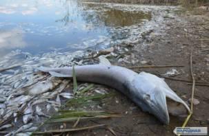 Росприроднадзор прокомментировал мор рыбы в озере Каспля