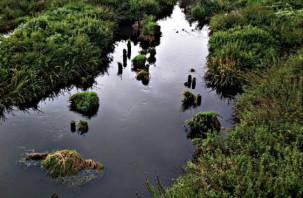 Прокуратура прокомментировала ситуацию с загрязнением реки Вязьма