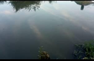 «Все погибло!». В Смоленской области появилась еще одна вонючая река