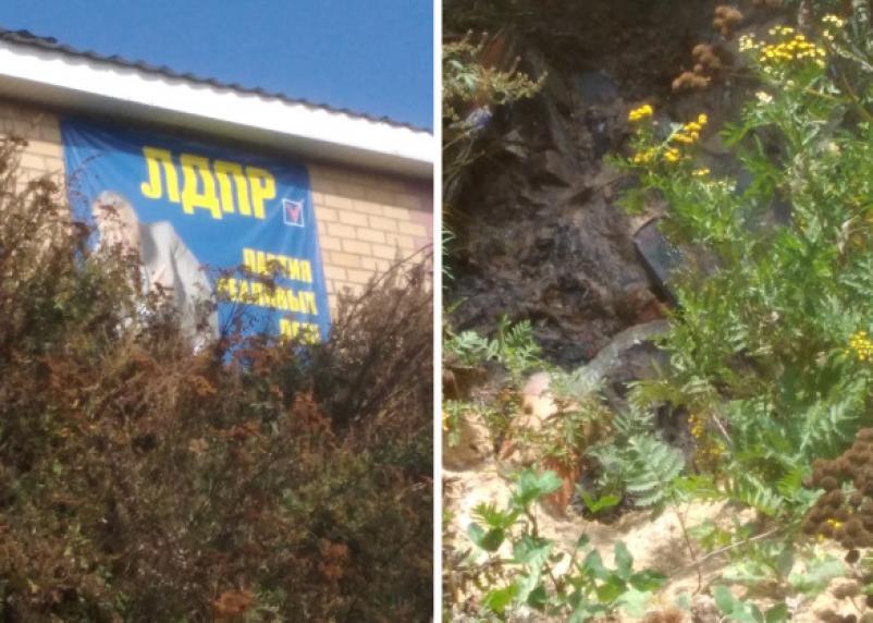 В Смоленском районе из-под баннера с Жириновским брызжут фекалии