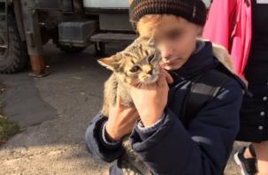 В Смоленске на улице Фрунзе спасли котенка. Видео попало в Сеть