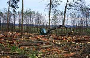 На Смоленщине снова выявлены незаконные вырубки леса