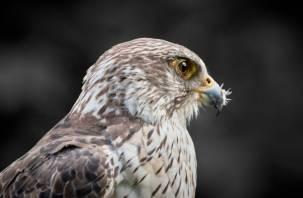 Из-за изменения климата гибнут хищные птицы