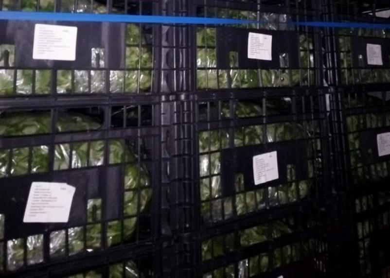 Смоленские таможенники задержали фуру с санкционным салатом