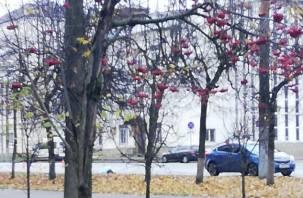 «Водителя жаль». На проспекте Гагарина насмерть сбили пешехода
