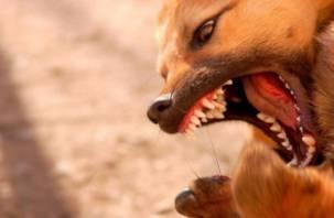 Рекомендации МЧС при нападении агрессивных собак